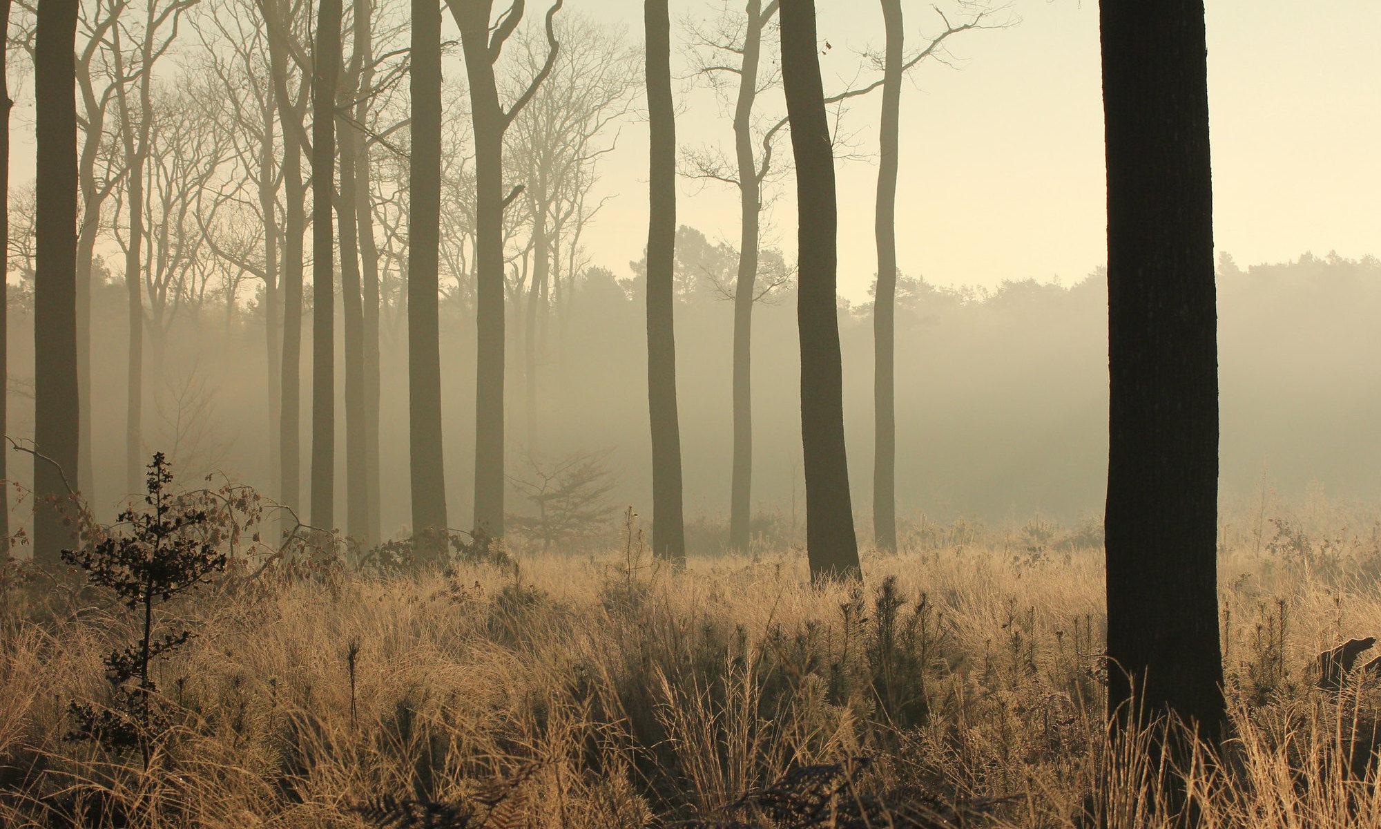 Forêt du Gâvre, Loire-Atlantique, CC-by-nc par Eugene Archer https://flic.kr/p/mfAjV6.