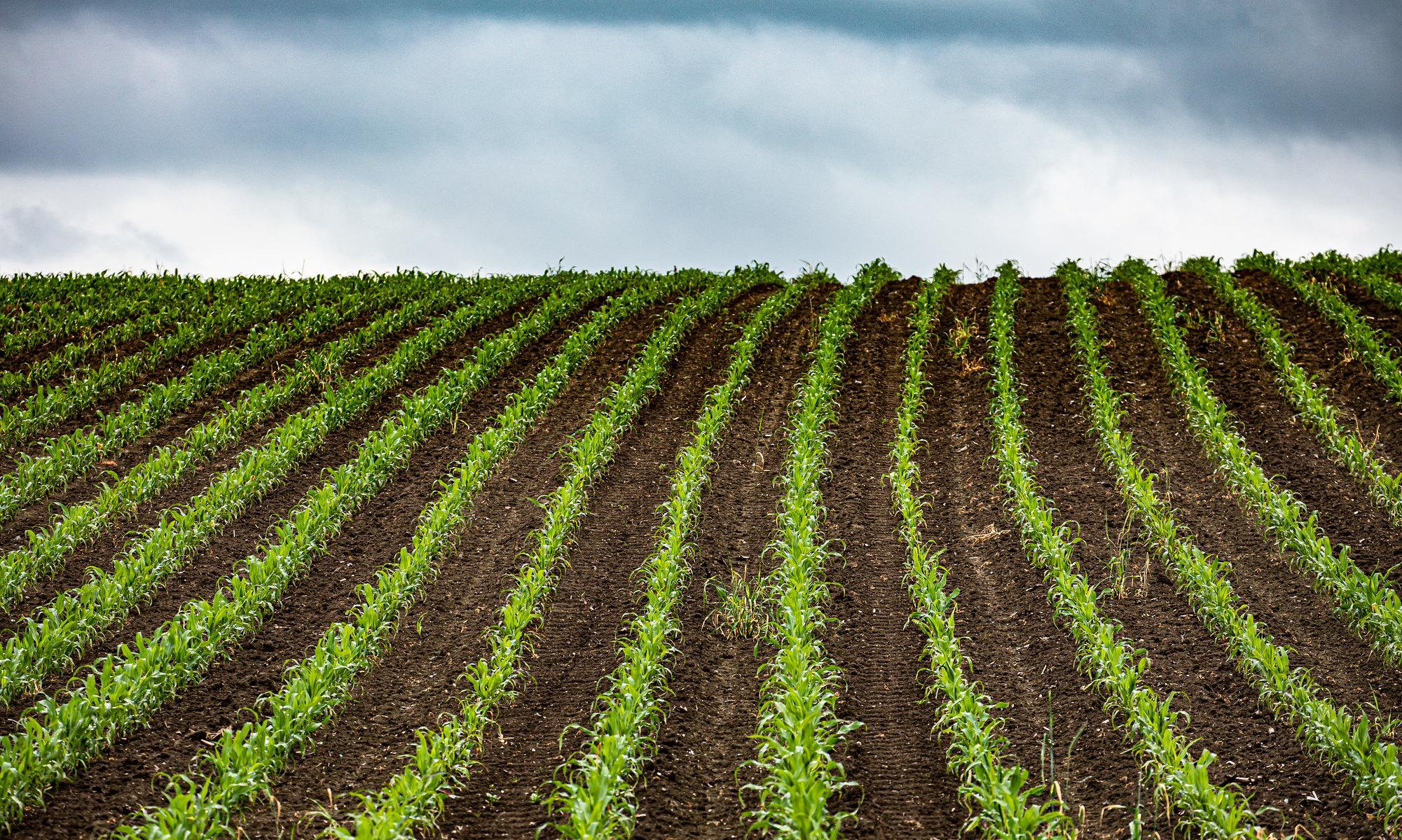 Agriculture CC par Albert Aschl